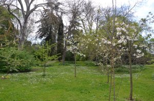 Ostara's grove